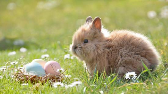 Bild: Gefärbte Eier im Korb und ein junger Hase